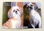 Personalized Custom Pet Photo Mousepad Rectangular Shaped